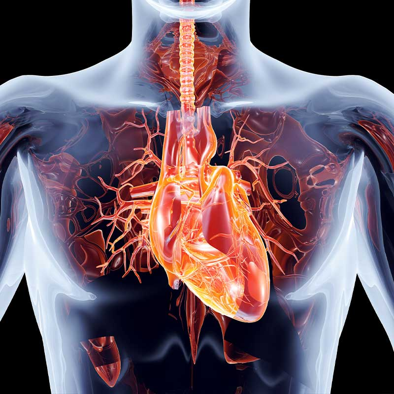 cardiac CT graphic rendering