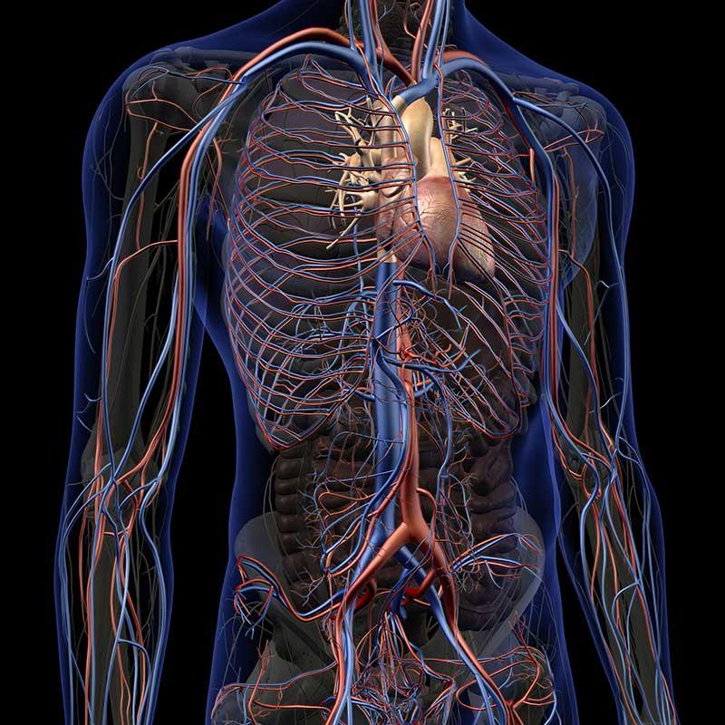 graphic rendering of body, other procedures