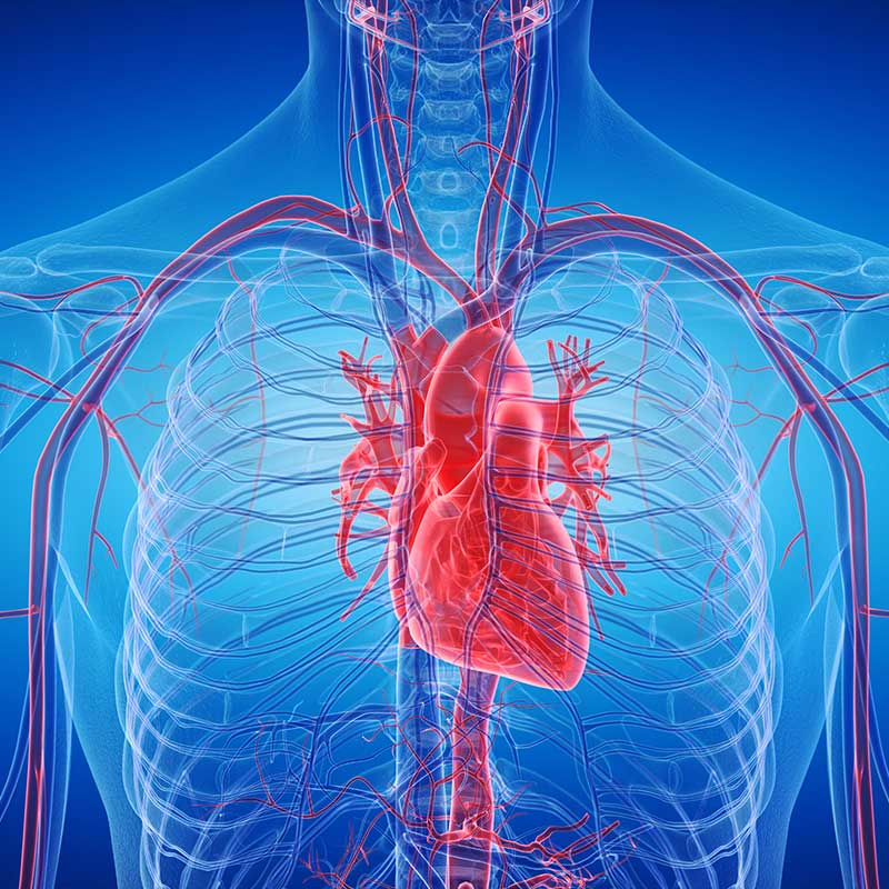 interventional radiology, graphic rendering of veins, venous procedures